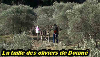 doume2
